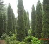 绿化亚博国际登录网址-蜀桧