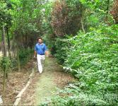 绿化亚博国际登录网址圃