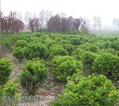 绿化亚博国际登录网址