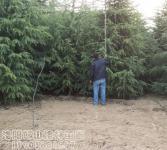 绿化亚博国际登录网址-雪松